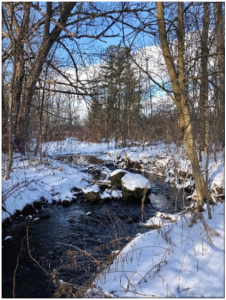 Stream in the middle of winter